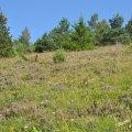 A la fin de l'été, la Bruyère callune fleuri sur les sommets