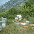 Travail sur les ruchers à Thym