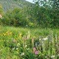 Un apercu de la diversité de la Flore de nos montagnes Pyrénéennes