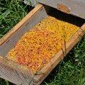 Un panier de trappe a pollen