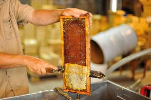 Uncapping-of-honey