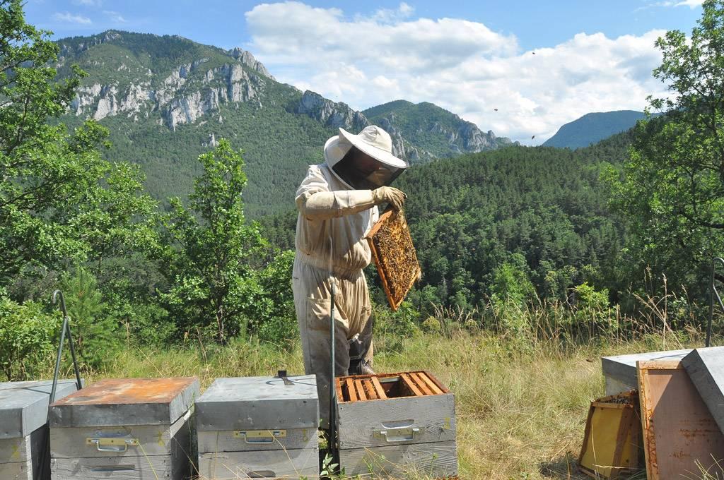 Surveillance des ruches en montagne
